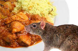 rat_curry